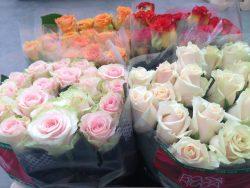 Róża 4